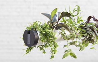 raumwunder | Pendularis - Blickfang mit Pflanzen | Pflanzenanordung
