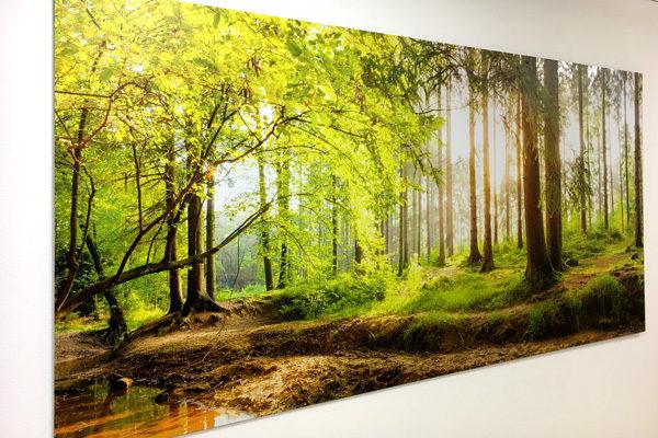 raumwunder | Ruheraum | Panoramabild Wald