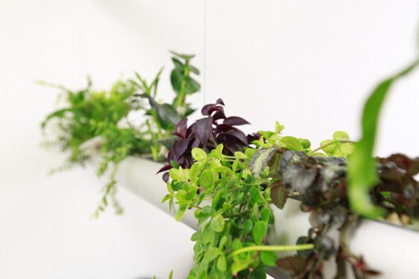 raumwunder | Ruheraum | Pendularis mit Pflanzen